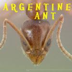 ACES ant pest control
