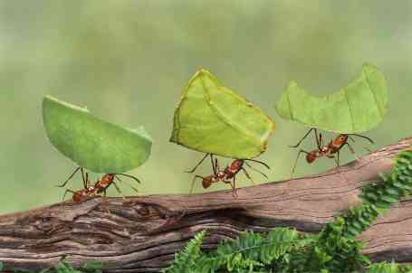 ants-and-leaves-tiny